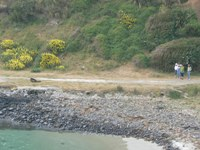 Sea lion at Taiaroa Head