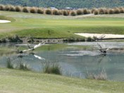 Giant dragon flies on the lake guarding the 6th
